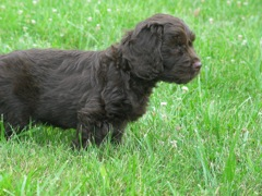 Hershey Bar Kisses - Buddy<br>Looking all alert and impressive.