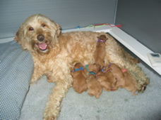 Flame and babies.  Dec 11, 2004. <br>