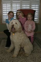 Picture of Conner, an Australian Labradoodle, with his family.