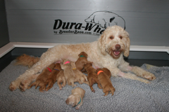 Picture of Mattie and her puppies