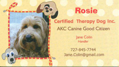 photo of Rosie, an australian labradoodle therapy dog
