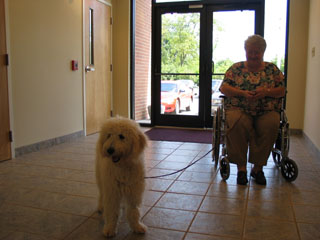 Picture of Gracie, an Australian Labradoodle, meeting a client.